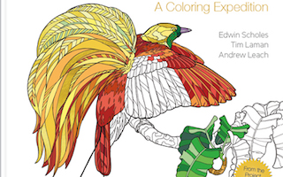 Coloring books feature familiar and exotic birds