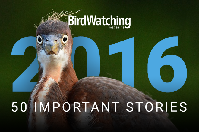 Year in review 2016: The 50 most important stories about birds and birders