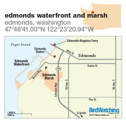 249. Edmonds Waterfront and Marsh, Edmonds, Washington