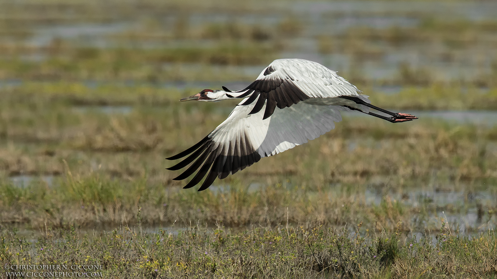 Webinars and other events for birders during Earth Week