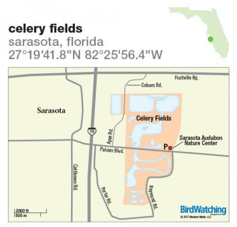 252 Celery Fields Sarasota Florida BirdWatching