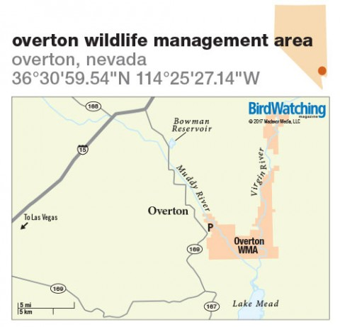 253. Overton Wildlife Management Area, Overton, Nevada
