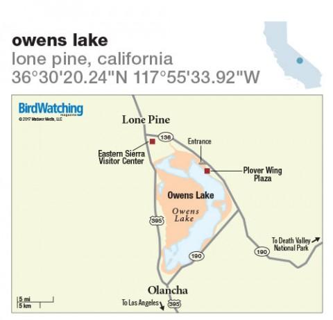 254 Owens Lake Lone Pine California Birdwatching