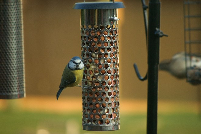 Birds follow green spaces to move between feeders