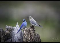 Birds-upload_2016-05-19-7870