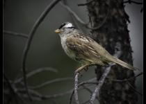 Birds-upload_2016-06-27-8352