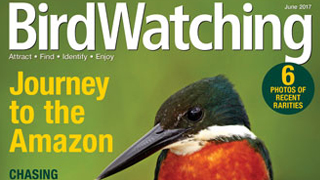 BirdWatching, June 2017 issue