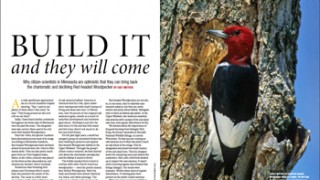 """Build It and They Will Come,"" by Chet Meyers, BirdWatching Magazine, April 2017."
