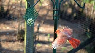redbird3B