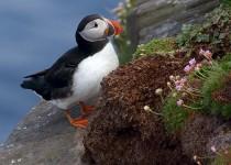 © Marshall FaintichHanda Island, Scotland5/17/17