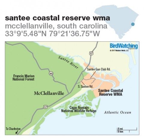 260. Santee Coastal Reserve WMA, McClellanville, South Carolina