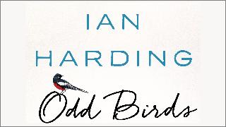 Ian Harding birding