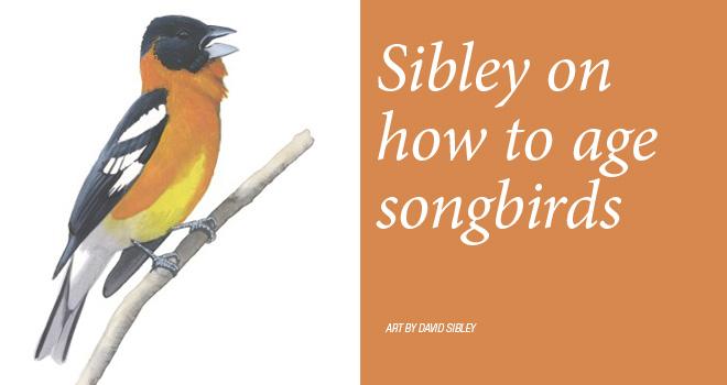 Sibley-songbird-rotator