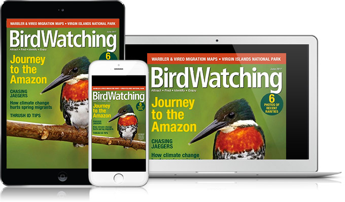 Subscribe to Birdwatching Digital Edition
