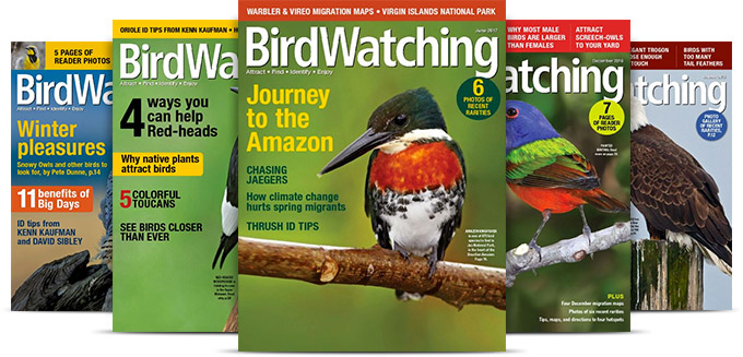 Subscribe to Birdwatching Magazine