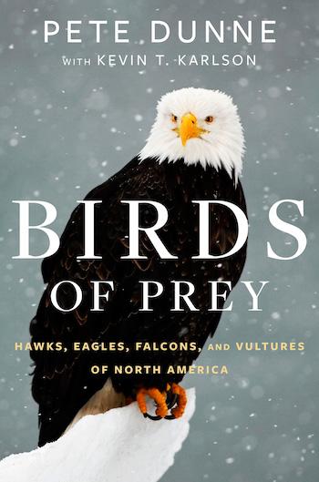 Birds of Prey_350