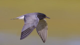 Vulnerability high for spring migrants
