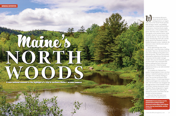 Birding Maine's North Woods