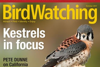 Our October issue features American Kestrel, Blackpoll Warbler, and 26 minutes of wow
