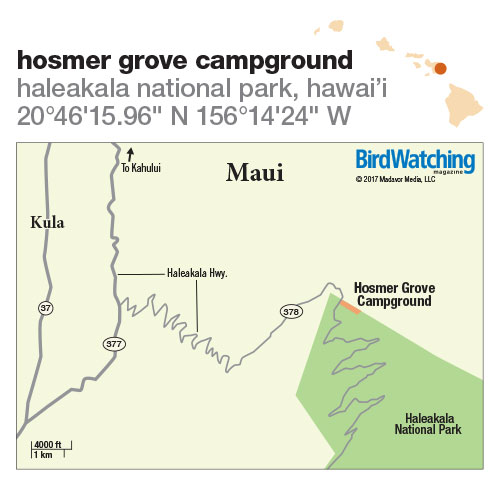261. Hosmer Grove Campground, Haleakala National Park, Hawai'i