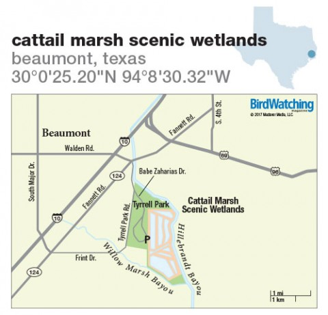264. Cattail Marsh Scenic Wetlands, Beaumont, Texas