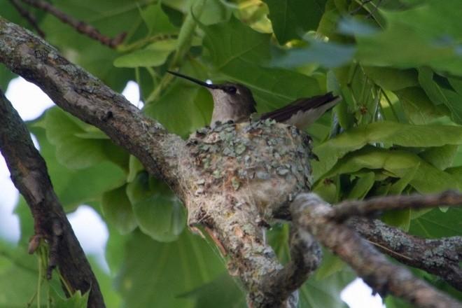 better nests