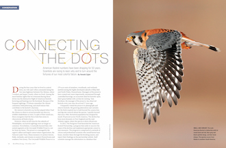 This article was published in the October 2017 issue of BirdWatching. Subscribe