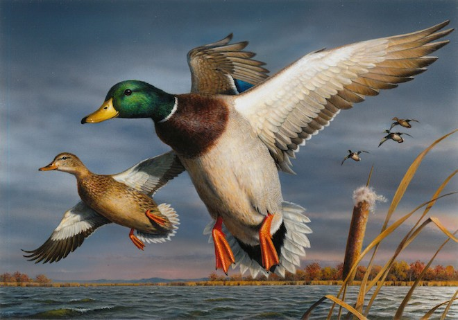 2017 Federal Duck Stamp Contest
