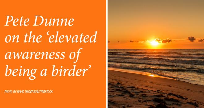 Dunne-birder-rotator