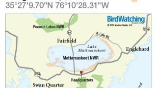 BWM1711_NC_MattamuskeetNWR_500x480