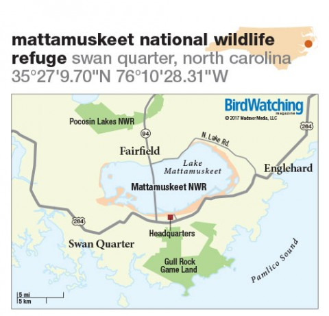265. Mattamuskeet National Wildlife Refuge, Swan Quarter, North Carolina