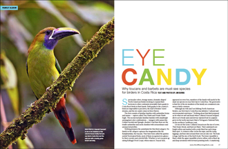 Eye candy: Toucans and barbets are must-see species in Costa Rica
