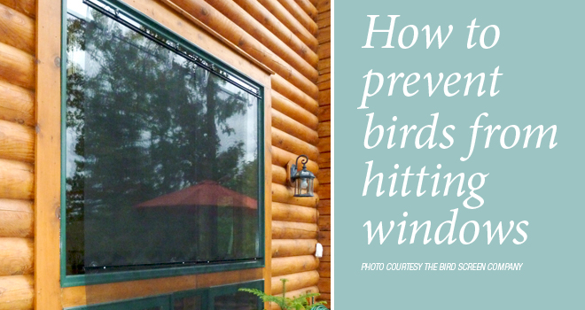 prevent-window-strikes-rotator