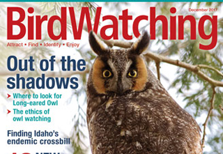 December issue of BirdWatching features owls, macaws, new books, and more