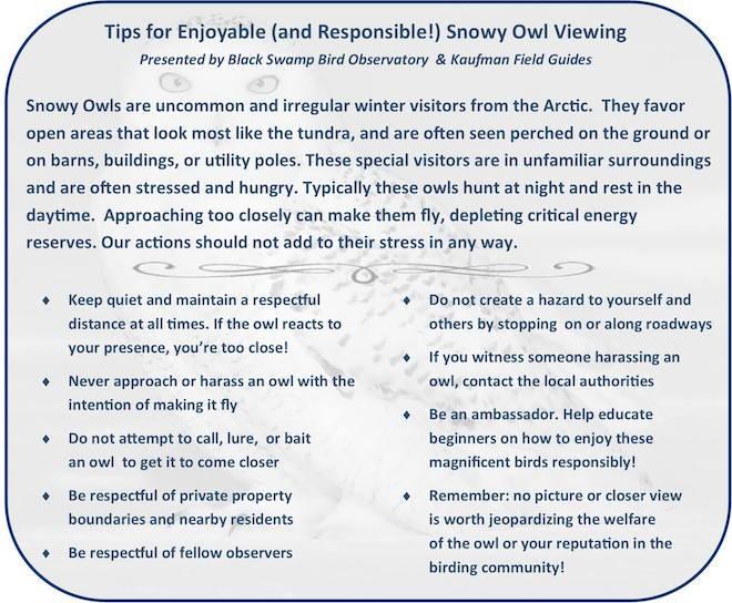 BSBO snowy owl tips