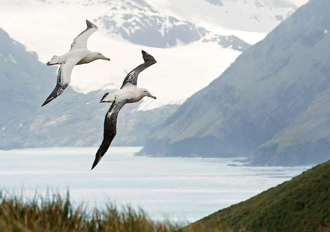 How albatrosses fly, find food, and nest
