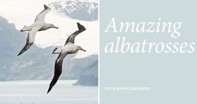 albatross-rotator