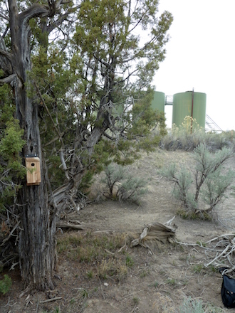 A bluebird nest box hangs on a tree not far from a pair of gas compressors. Photo by Nathan Kleist