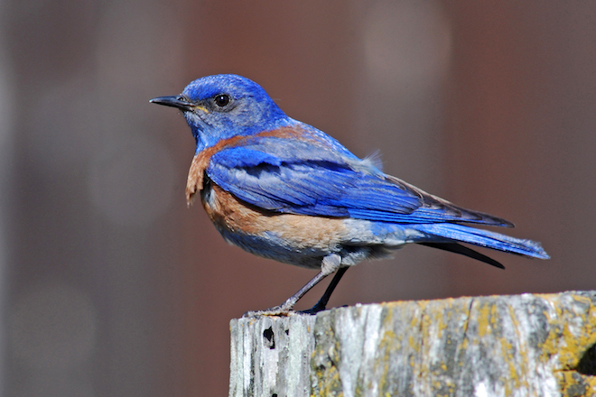 Noise pollution causes chronic stress in birds, health consequences for young