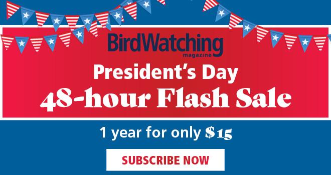 BWM 1802 Presidents Day Web Ads_660x350