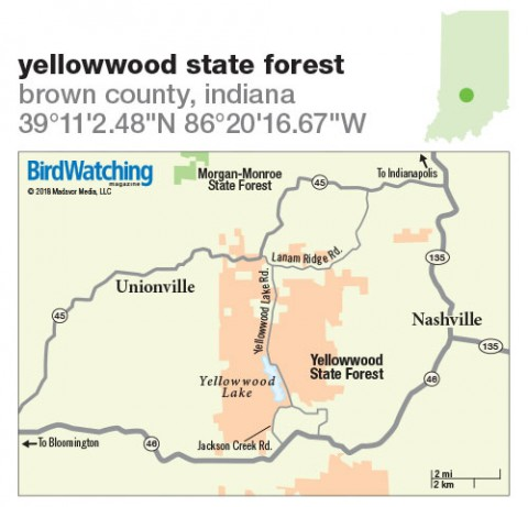 272 Yellowwood State Forest Brown County Indiana Birdwatching