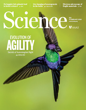 A Violet-crowned Woodnymph maneuvering in flight is featured on the cover of Science. Photo by Glenn Bartley/BIA/Minden Pictures