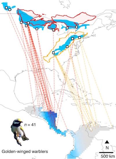 gww migration map