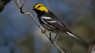 April birding festivals