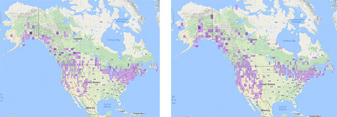 Northern Goshawk Migration Maps