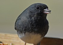 awesomejunco