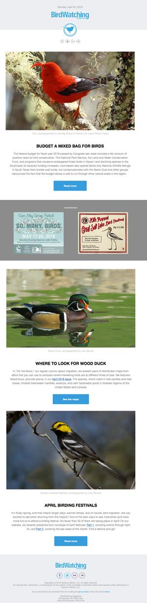 birding newsletter