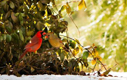 Spring bird feeding: Helping birds during a critical time