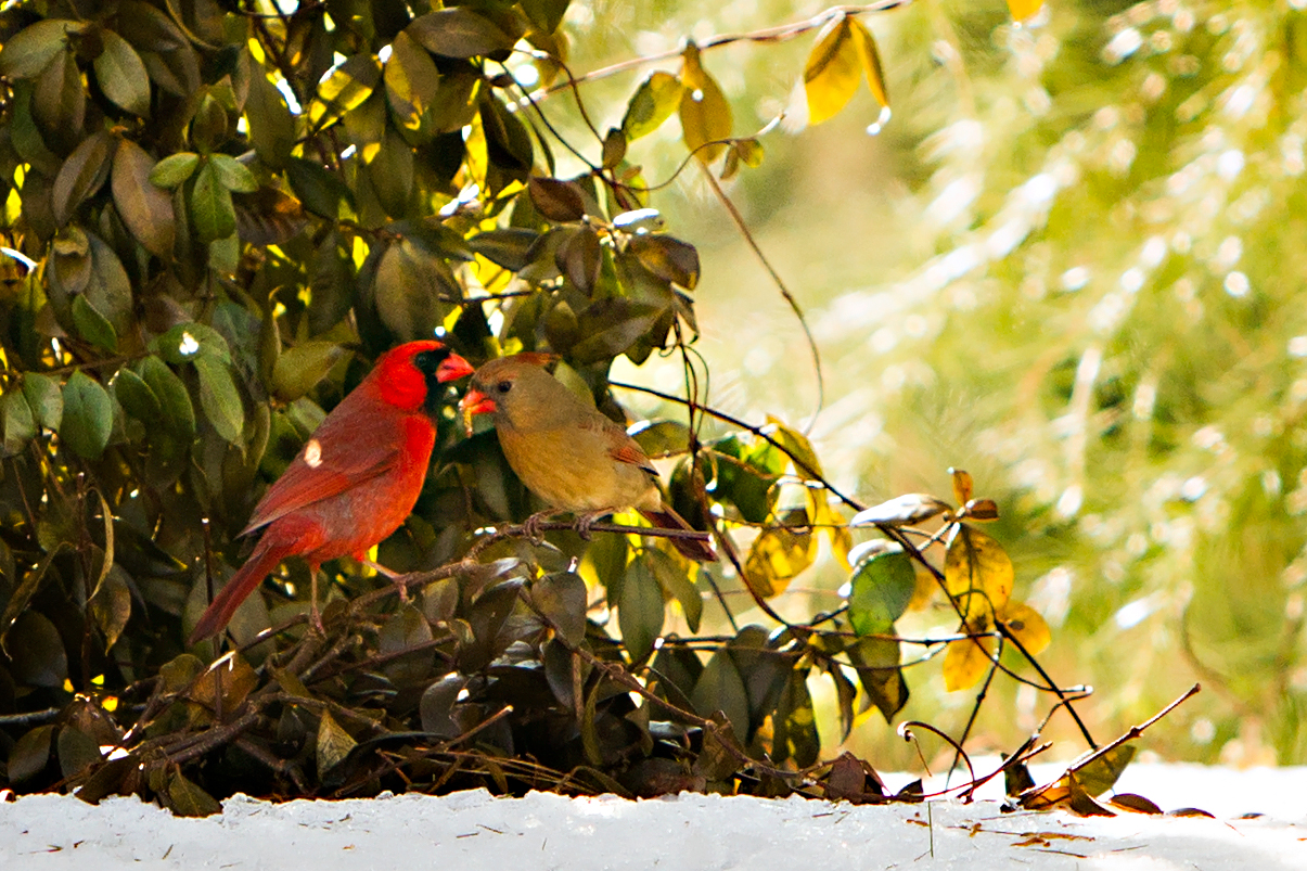 spring bird feeding