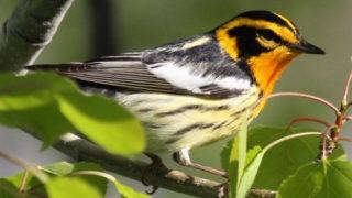bird law